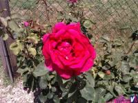 parque_tejares_2011_07
